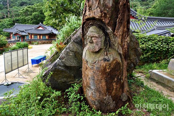 죽은 나무 밑동에 누군가 보리달마를 조각해놓았다.